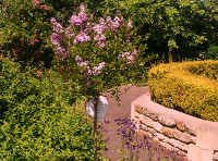 A standard lilac tree was planted by Wollaston Parish Council in 2012 to commemorate the Queen's Diamond Jubilee.